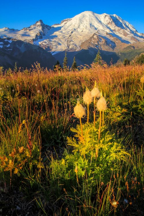 Mount Rainier and autumn flowers