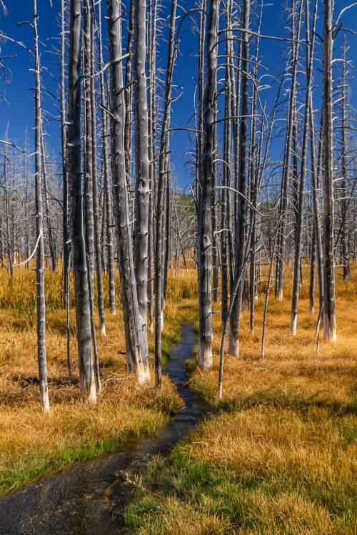 The white socks (Yellowstone National Park, Wyoming)