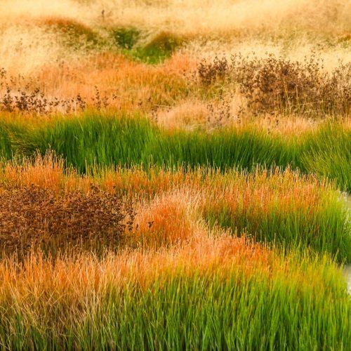 Colourful marsh