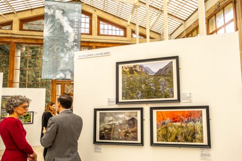"My picture ""Secret Garden"" at the IGPOTY 2019 exhibition (bottom right)"