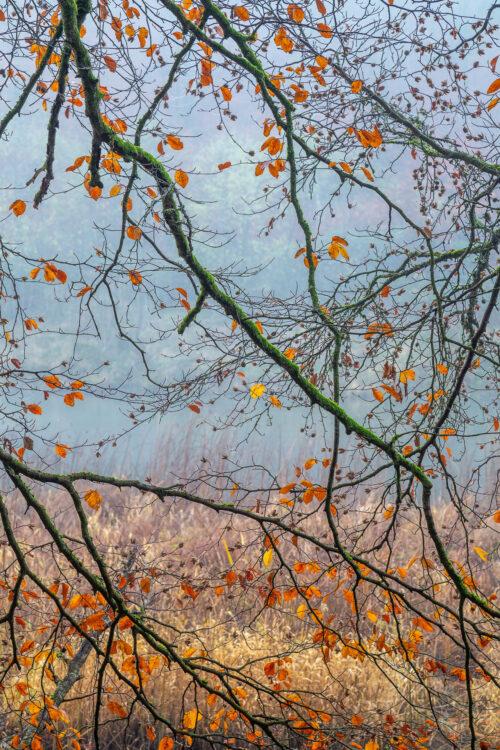 Branches et brume