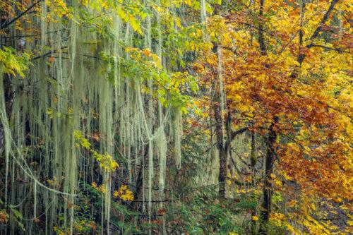 Fils et feuilles